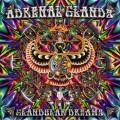 Adrenal Glands – Glandular Dreams