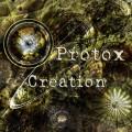 Protox – Creation